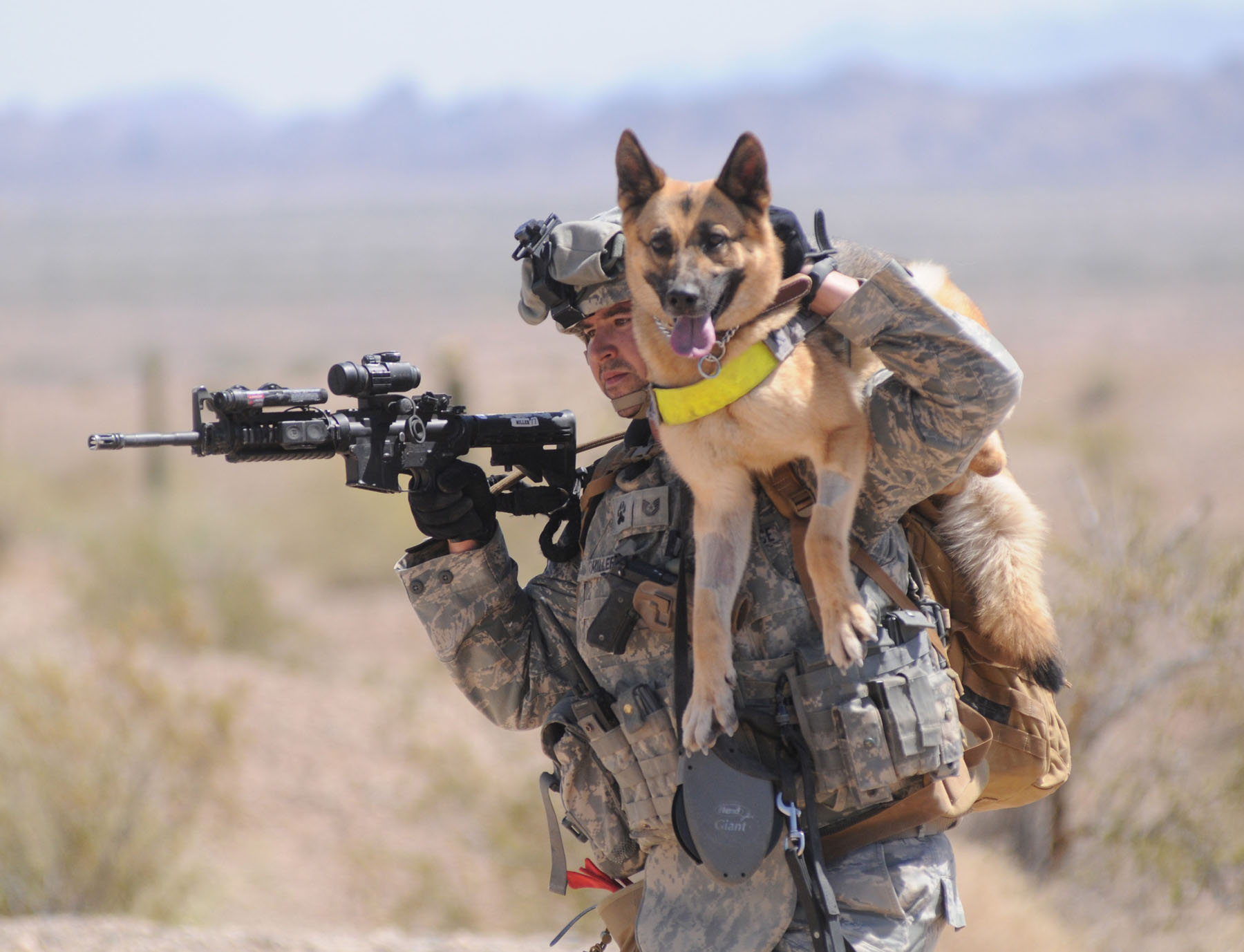 5 Best K9 & Military Dog Documentaries On Training & Breeding